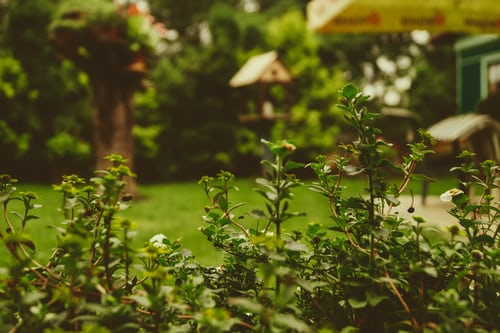 Ideer til havesving – flyt til barndommens land